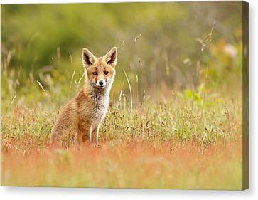 Kit Fox Canvas Print - The Catcher In The Sorrel by Roeselien Raimond