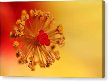 Canvas Print featuring the photograph The Center Of The Hibiscus Flower by Debbie Oppermann