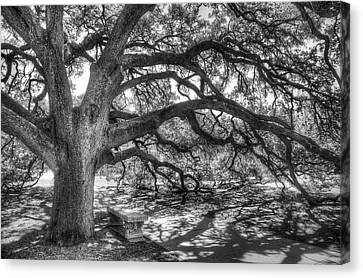 Live Oaks Canvas Print - The Century Oak by Scott Norris