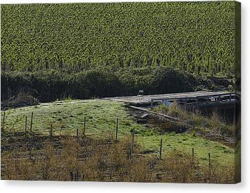 The Chair In The Vineyard Canvas Print