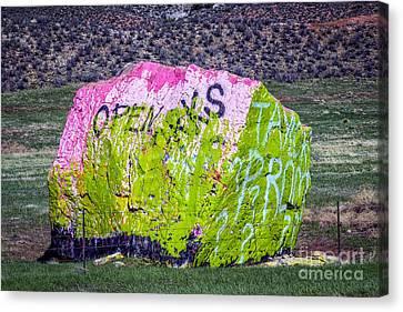 The Chameleon Canvas Print by Jon Burch Photography