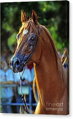 The Champion Canvas Print by Angel  Tarantella