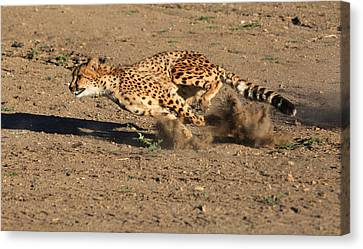 Cheetah Canvas Print - The Chase by Donna Kennedy