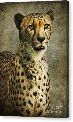 The Cheetah Canvas Print by Angela Doelling AD DESIGN Photo and PhotoArt