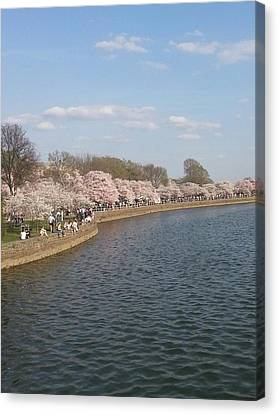 The Cherry Blossom Festival In D.  C Canvas Print