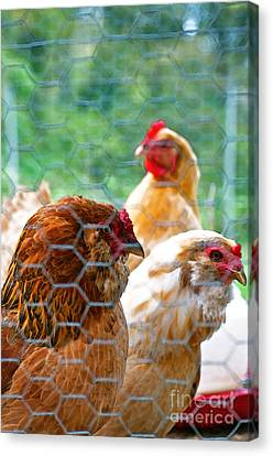 The Chickens Canvas Print by Gwyn Newcombe