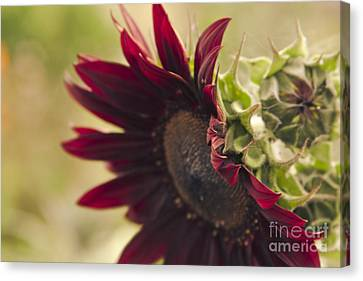 The Nature Center Canvas Print - The Child Of Nature by Sharon Mau
