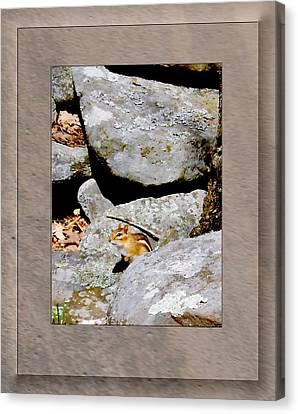 The Chipmunk Canvas Print by Patricia Keller