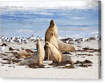 The Choir Canvas Print by Mike Dawson