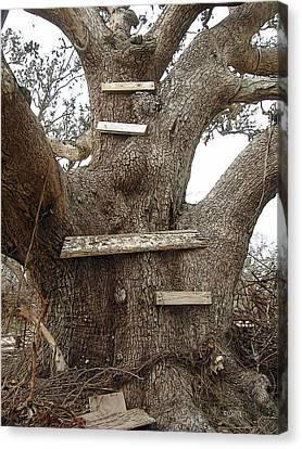 The Climbing Tree - Hurricane Katrina Survivor Canvas Print