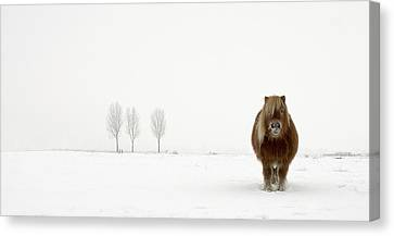 Winter Landscapes Canvas Print - The Cold Pony by Gert Van Den