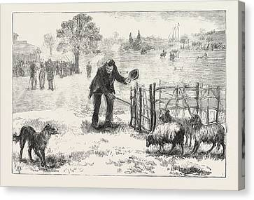 The Collie Dog Trials At The Alexandra Palace,  Penning Canvas Print by English School
