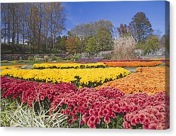 The Color Garden Canvas Print by Betsy Knapp