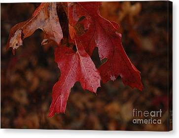 The Color Of Fall Canvas Print by Art Hill Studios