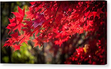 The Color Of Fall Canvas Print by Patrice Zinck