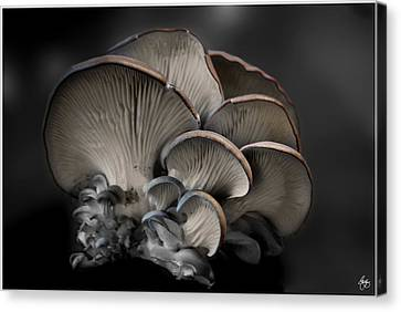 Canvas Print featuring the photograph Painted Fungus by Wayne King