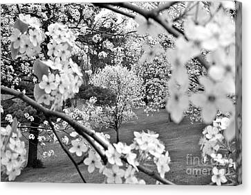 The Color Of Spring Canvas Print by Jay Nodianos