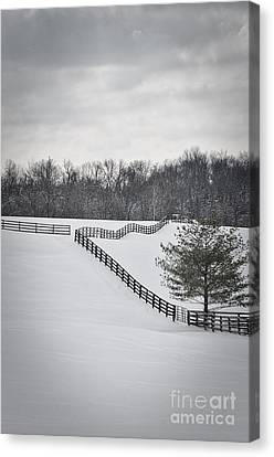 The Color Of Winter - Bw Canvas Print by Mary Carol Story