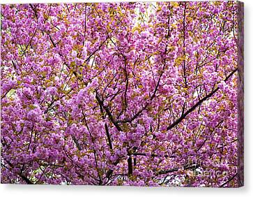 The Color Purple 2 Canvas Print by Paul W Faust -  Impressions of Light