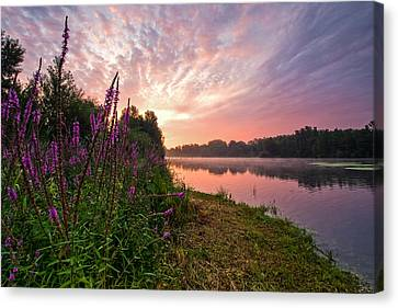 The Color Purple Canvas Print by Davorin Mance