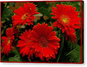 Gerbera Daisies Red Canvas Print by James C Thomas