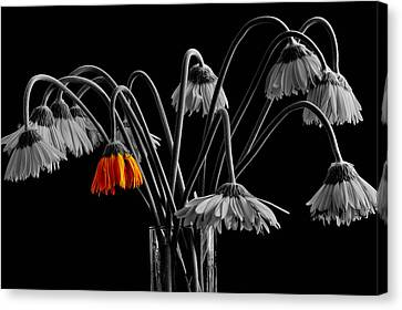 The Colorful One Canvas Print by Marwan Khoury