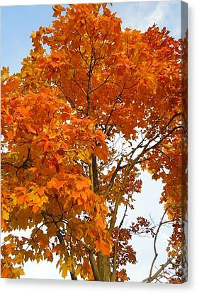 The Colors Brought To Autumn Canvas Print by Guy Ricketts