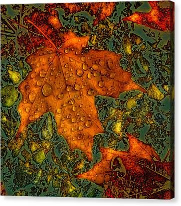 The Colors Of Autumn Canvas Print by David Patterson