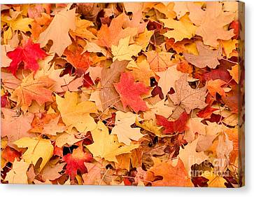 The Colors Of Fall Canvas Print by Syed Aqueel