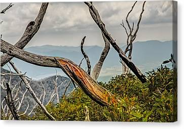 The Colour Within Canvas Print by Mark Lucey