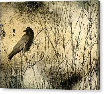 The Common Crow Canvas Print