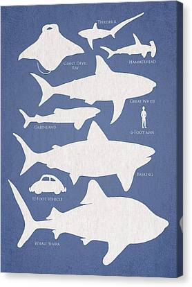 Hammerhead Shark Canvas Print - The Comparison by Aged Pixel