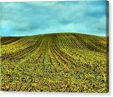 The Corn Rows Canvas Print by Julie Dant