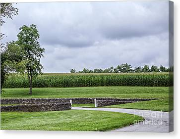 The Cornfield Canvas Print by Kay Pickens