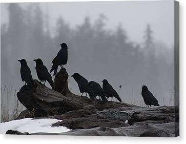 The Corvidae Family  Canvas Print