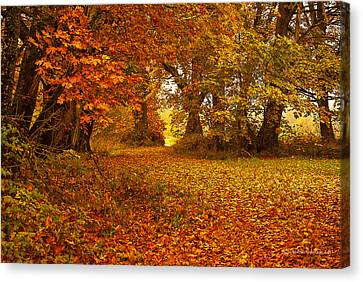 The Covered Path Canvas Print