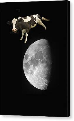 The Cow Jumped Over The Moon Canvas Print by John Short