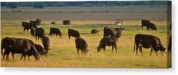 The Cows Won't Mind Canvas Print by Barbara Dudley