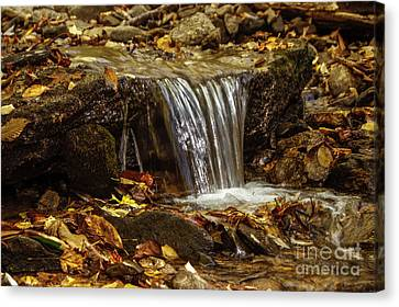 Canvas Print featuring the photograph The Creek by Debra Crank