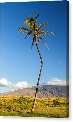 The Crooked Palm Tree Canvas Print