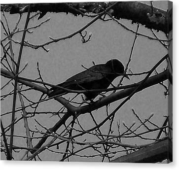 The Crow Canvas Print by Heather L Wright