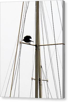 Canvas Print featuring the photograph The Crow Leaving The Absent Crows Nest by John King