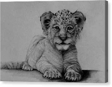 The Cub Canvas Print by Jean Cormier