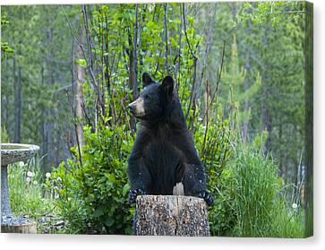 The Cub That Came For Lunch 3 Canvas Print