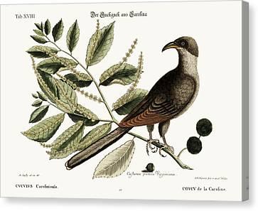 The Cuckow Of Carolina Canvas Print by Splendid Art Prints
