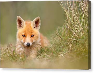Kit Fox Canvas Print - The Cute Kit by Roeselien Raimond