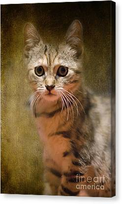 The Cutest Kitty Canvas Print