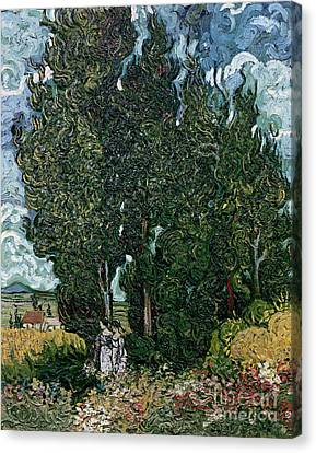 The Cypresses Canvas Print by Vincent van Gogh