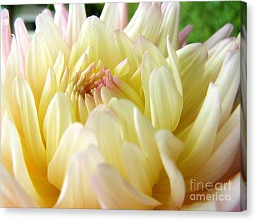 Canvas Print featuring the photograph Yellow Dahlia by Margie Amberge
