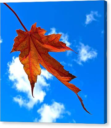 The Dance Of Autumn Canvas Print
